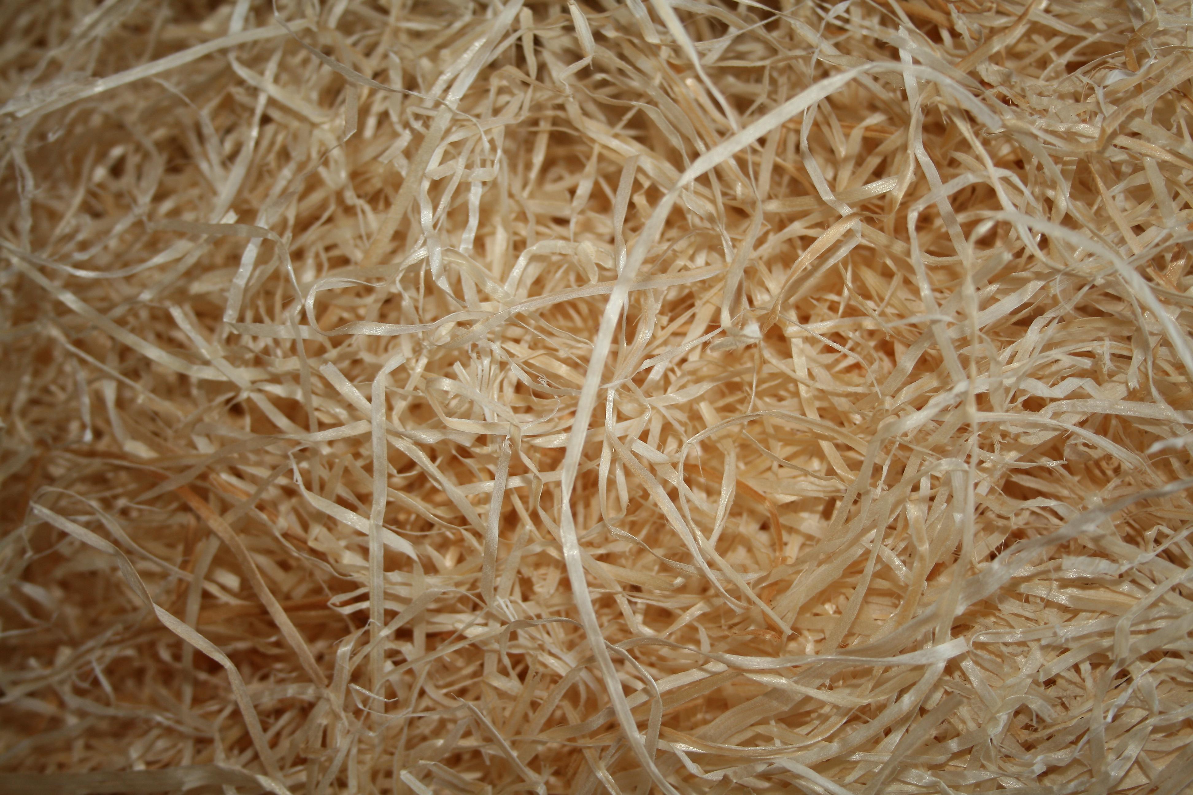 Wood Wool - Pollywog