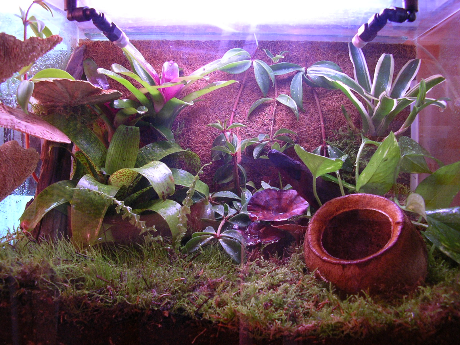 Pollywog Natural Decor & Habitat Enrichment